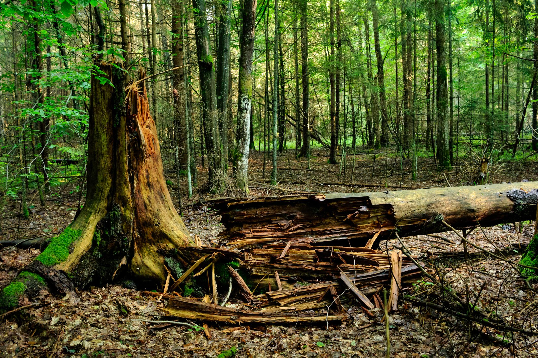 A fallen tree in a forest